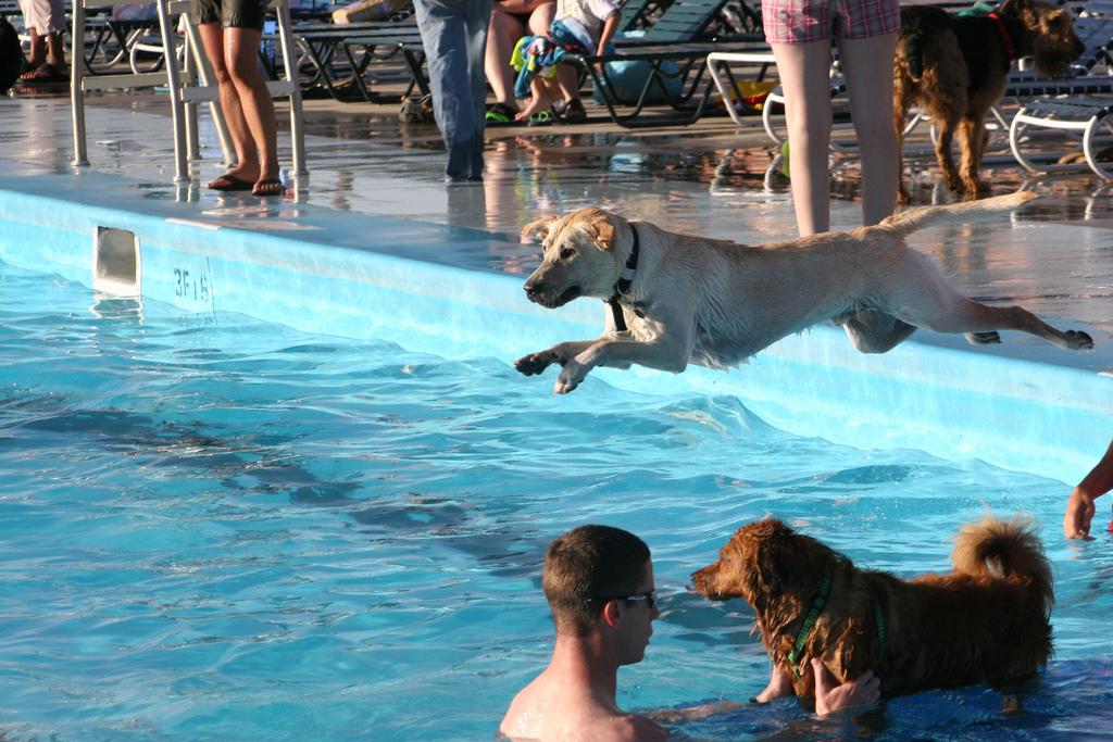 Condo living swimming pool etiquette for Swimming etiquette public pool