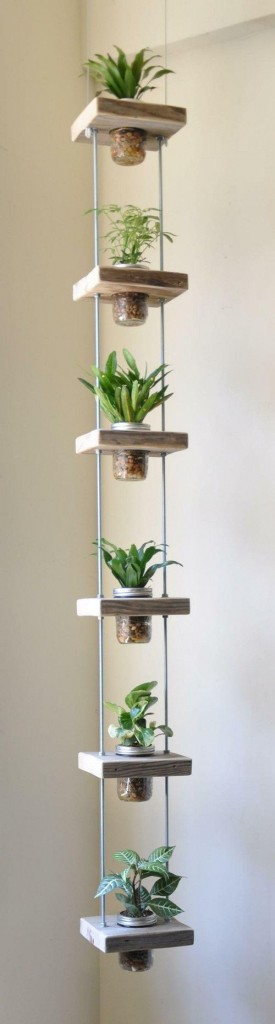 Indoor Plant for Small Condo Space