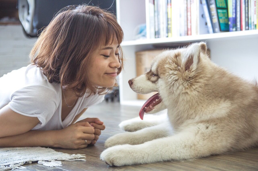 Condo Sharing Rules Total Responsibility of Pet