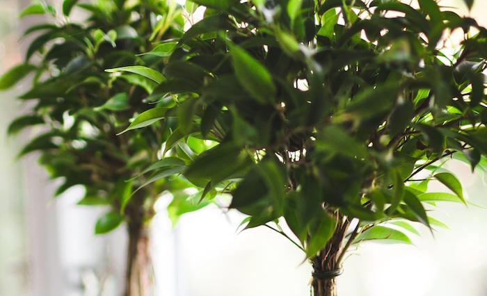 Grow an indoor garden