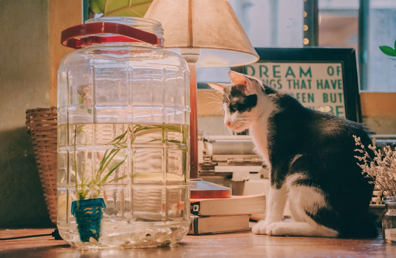 cat fish pet