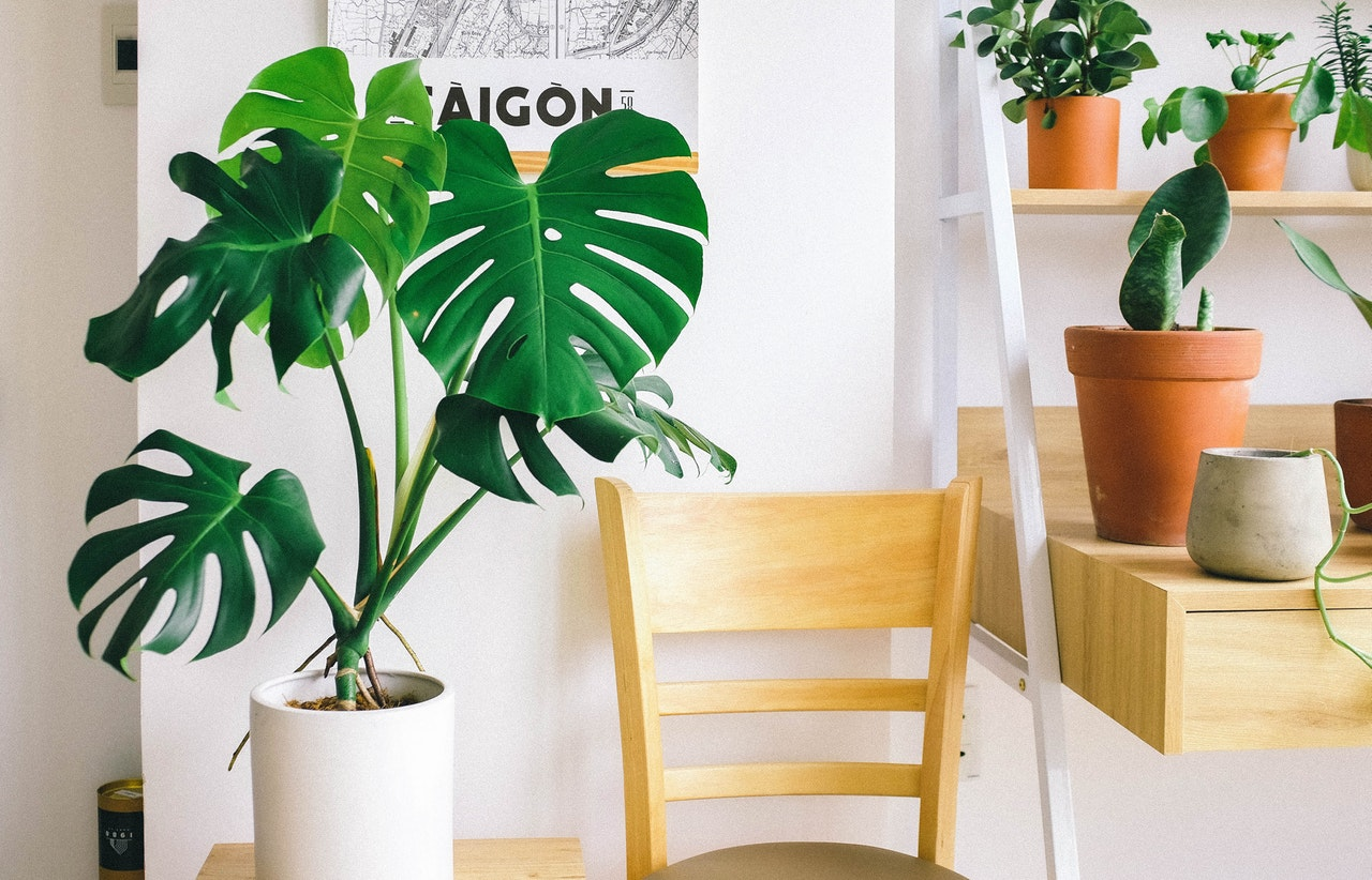 A Busy Millennial's Guide on How To Take Care of Condo Plants