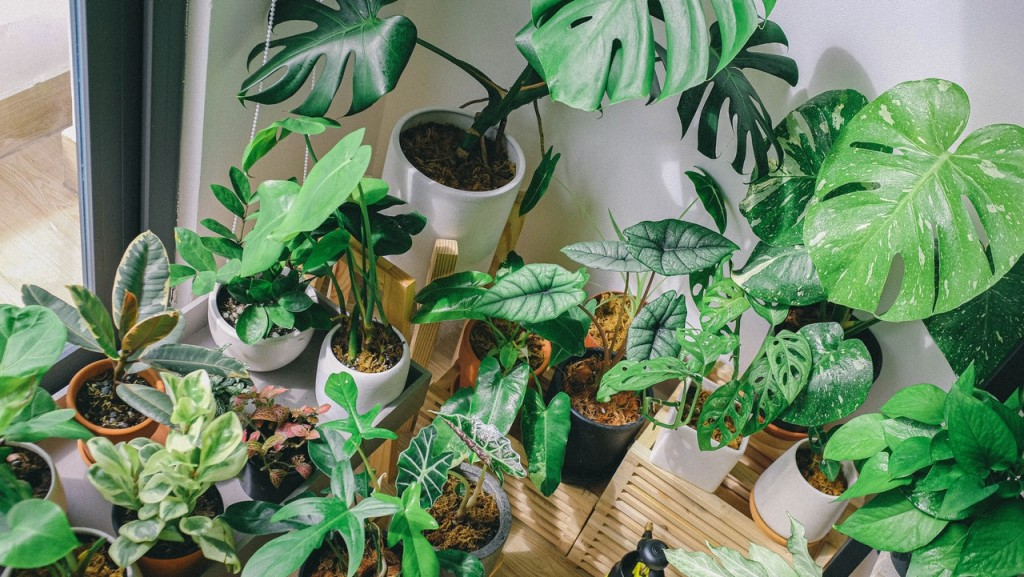 choose plant that will compliment your lifestyle