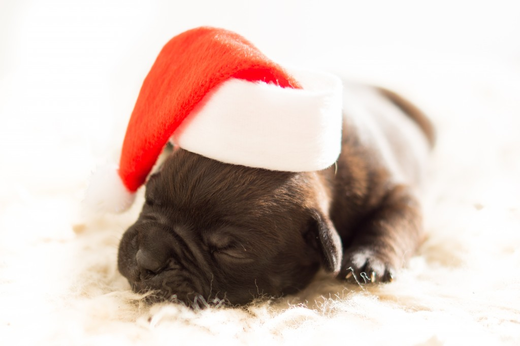 Christmas Pet Party ideas