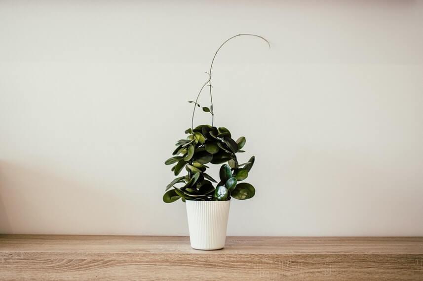 feng shui go green get plants