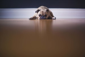 10 Tips to Follow to Become a Responsible Pet Owner