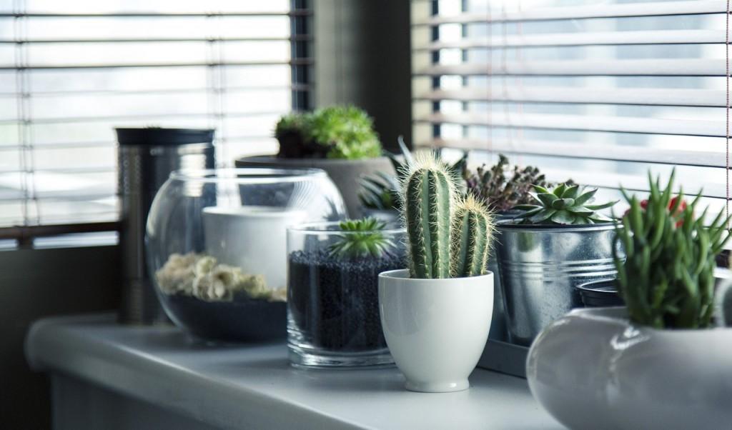 Perfect Pretty Plants on the Condo Counter