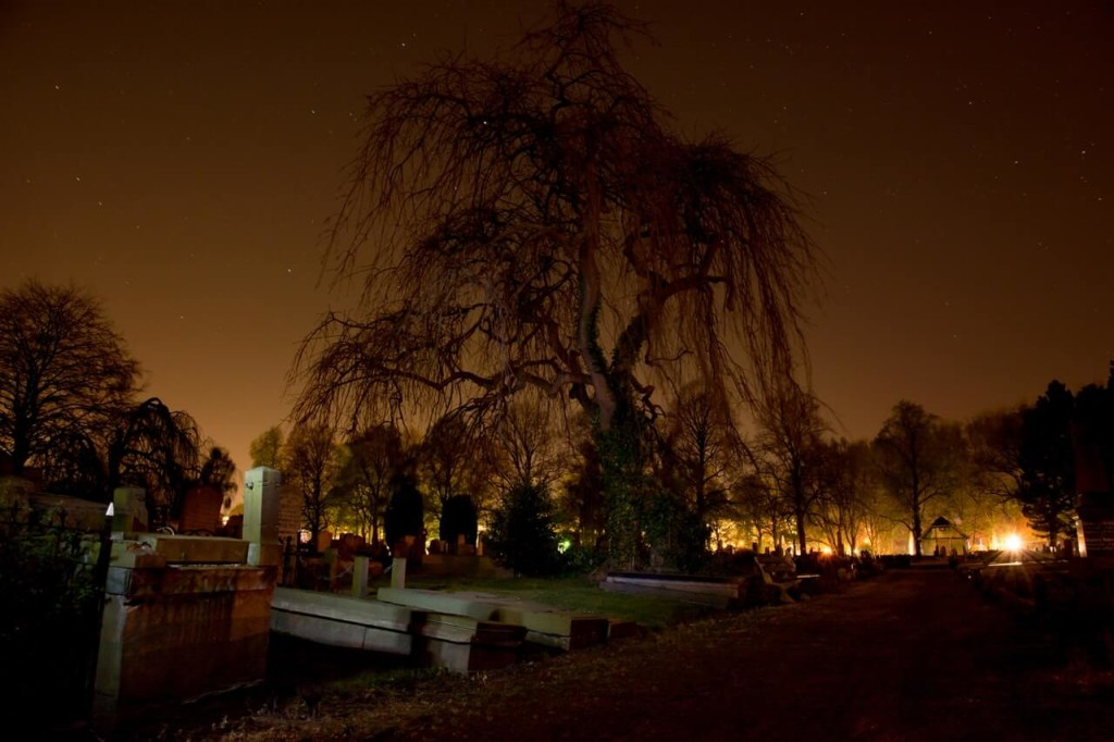tikbalang tree